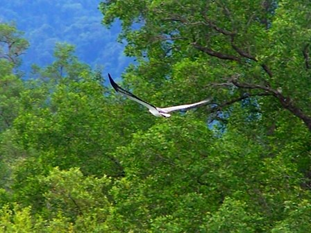 Sea Eagle on Mangrove Cruise Langkawi