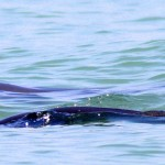 Squids and Dolphins in Andaman Sea