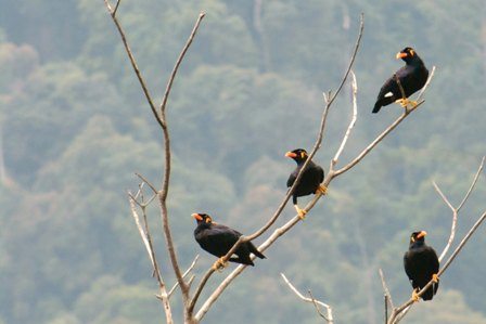 https://www.junglewalla.com/langkawi-halfday-birdwatching-tour/