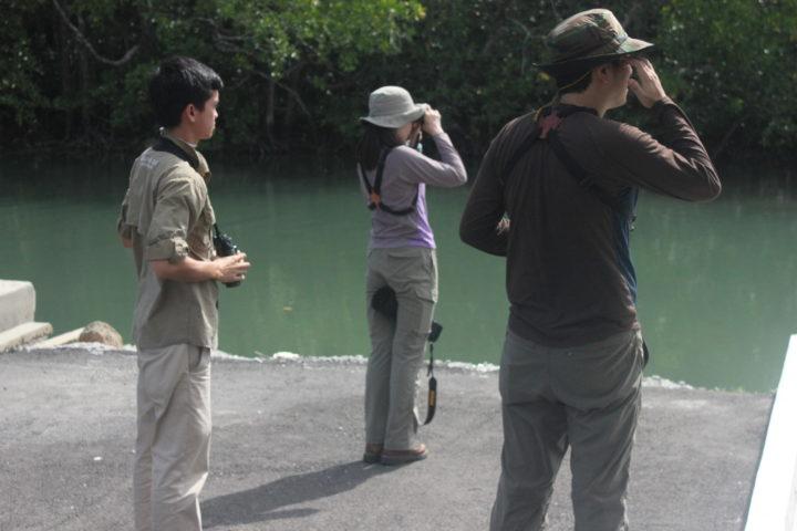 https://www.junglewalla.com/birdwatching-2-days/