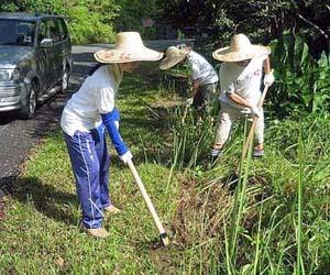 HSBC-planting