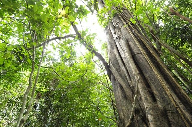 Junglewalla- Lubuksembilang-Trekking-Langkawi