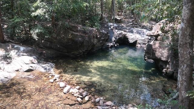Nature Jungle Pool