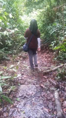 Walking The Jungle