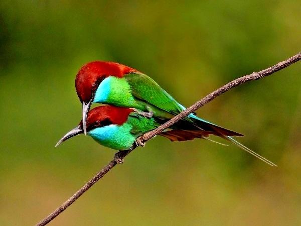 Birdwatching Tour – 2 Days