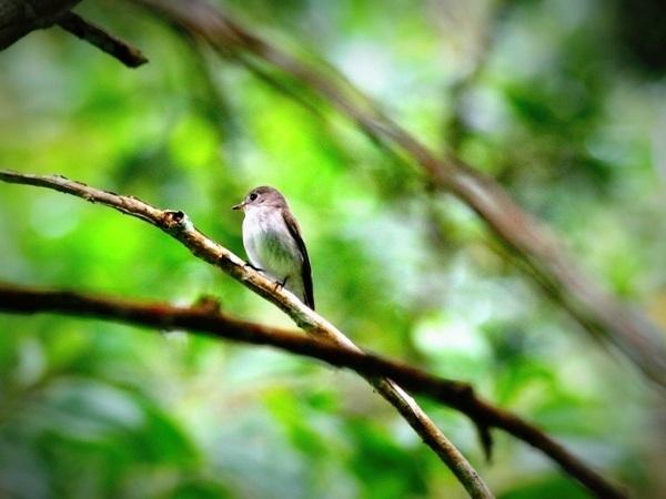 bird-2-days-16