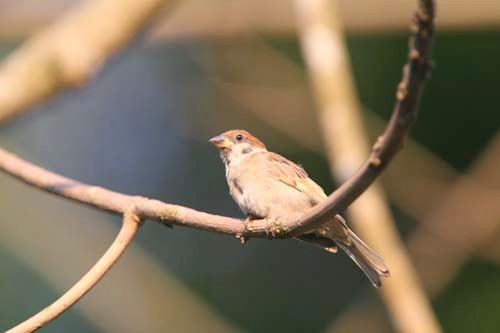 bird-2-days-26