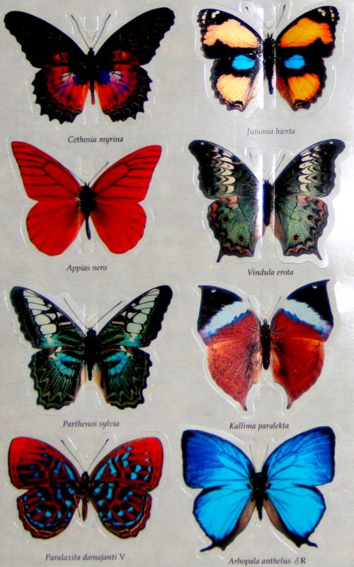 butterfly-3d-stickers-1