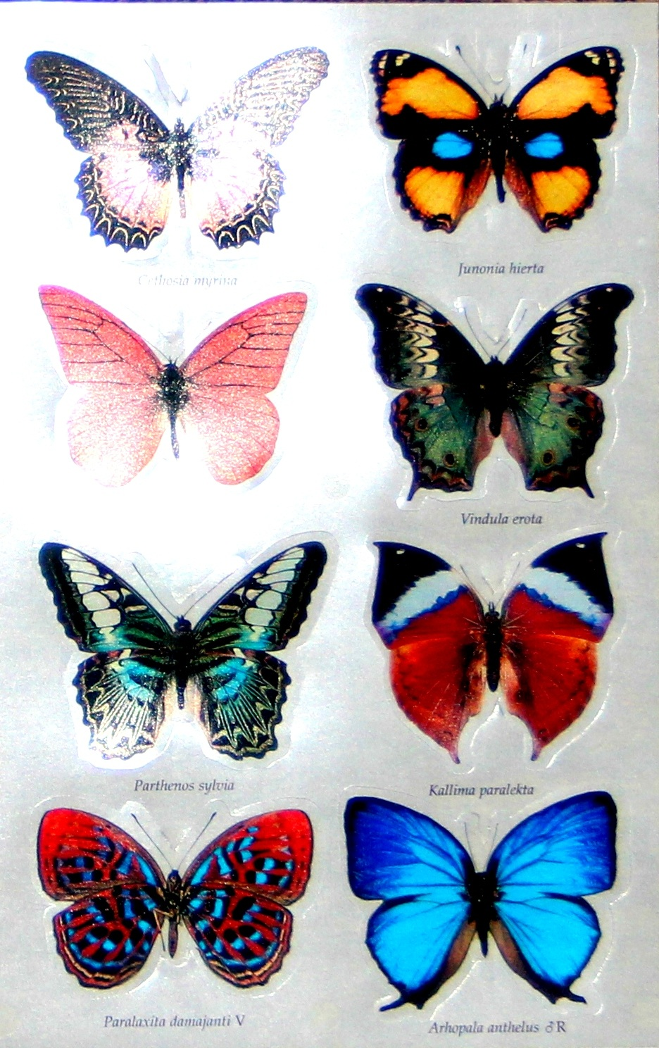 butterfly-3d-stickers-4