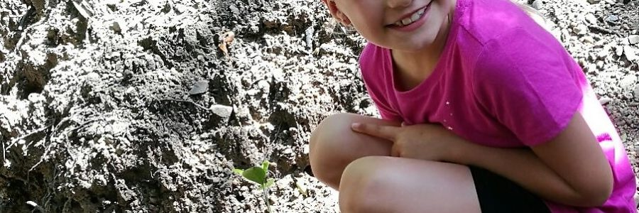 Langkawi Unesco Geopark Mangrove Cruise