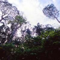penang-national-park-(1)