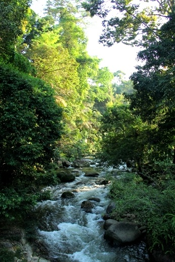 Sedim Rainforest Canopy