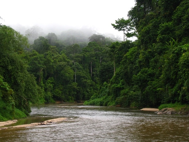 Ulu Muda and Pedu Lake Forest Reserve