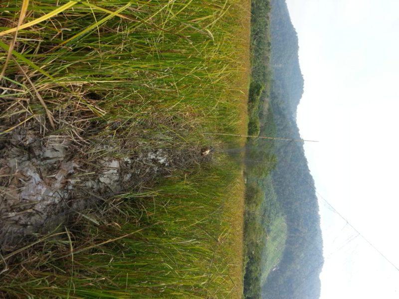 Langkawi; Against Illegal Mist Nets