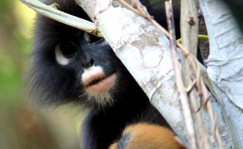 Malaysia Wildlands Project