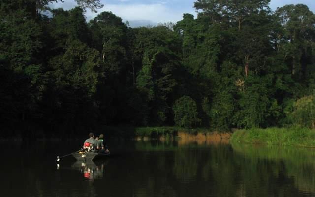 https://www.junglewalla.com/wilds-of-ulu-muda/